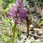 22_orchidea